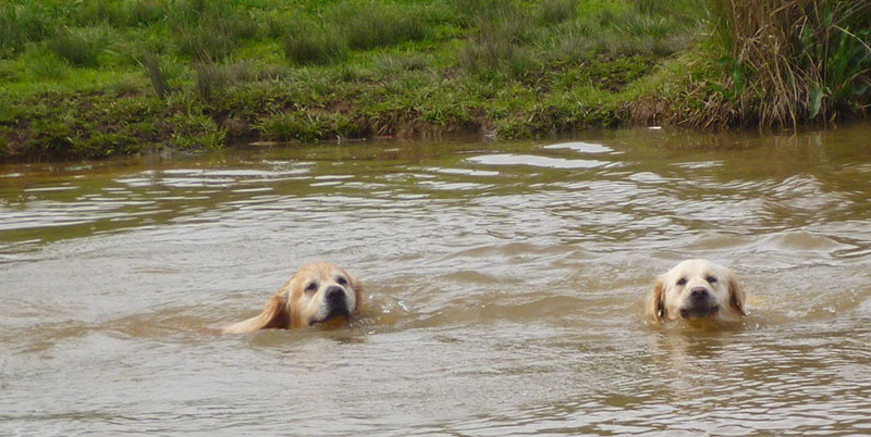 Obi and Aayla Swimming in the dam